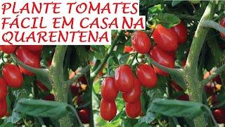 Como Plantar Tomates Cereja e Tomates Uvas em Casa