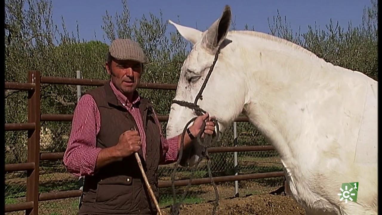 Tierra y mar visita a los caballos marisme os de hinojos for Los jardines de la cartuja