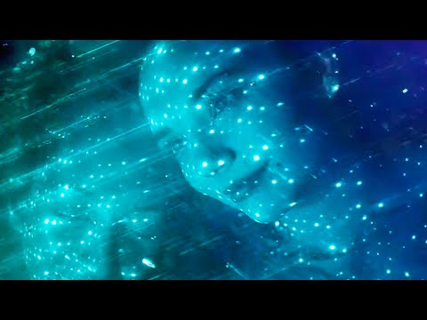 Deftones - Sextape [Official Music Video]