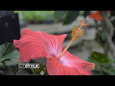 Summer Tropical Plants at Van Wilgen's Garden Center in North Branford, CT
