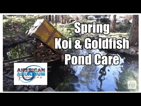 Koi Fish & Goldfish Pond Care- Complete Spring Maintenance