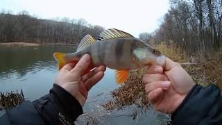 Ловля окуня осенью Рыбалка в глухом коряжнике