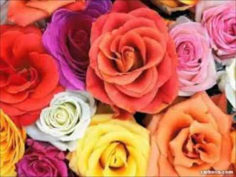 كلام عن الورد بالانجليزي مترجم Aiqtabas Blog