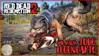 ME ATACA EL LOBO LEGENDARIO!   RED DEAD REDEMPTION 2