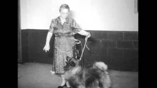 Muncie Kennel Club Dog Show Preview, 1969