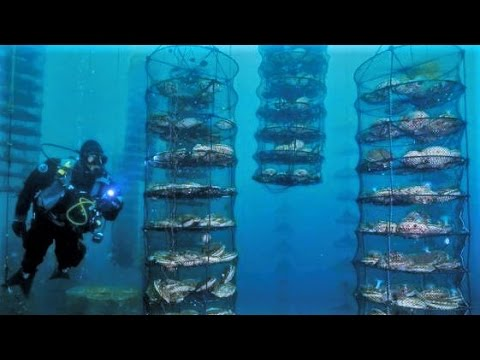 9 UNUSUAL Things Under the Sea