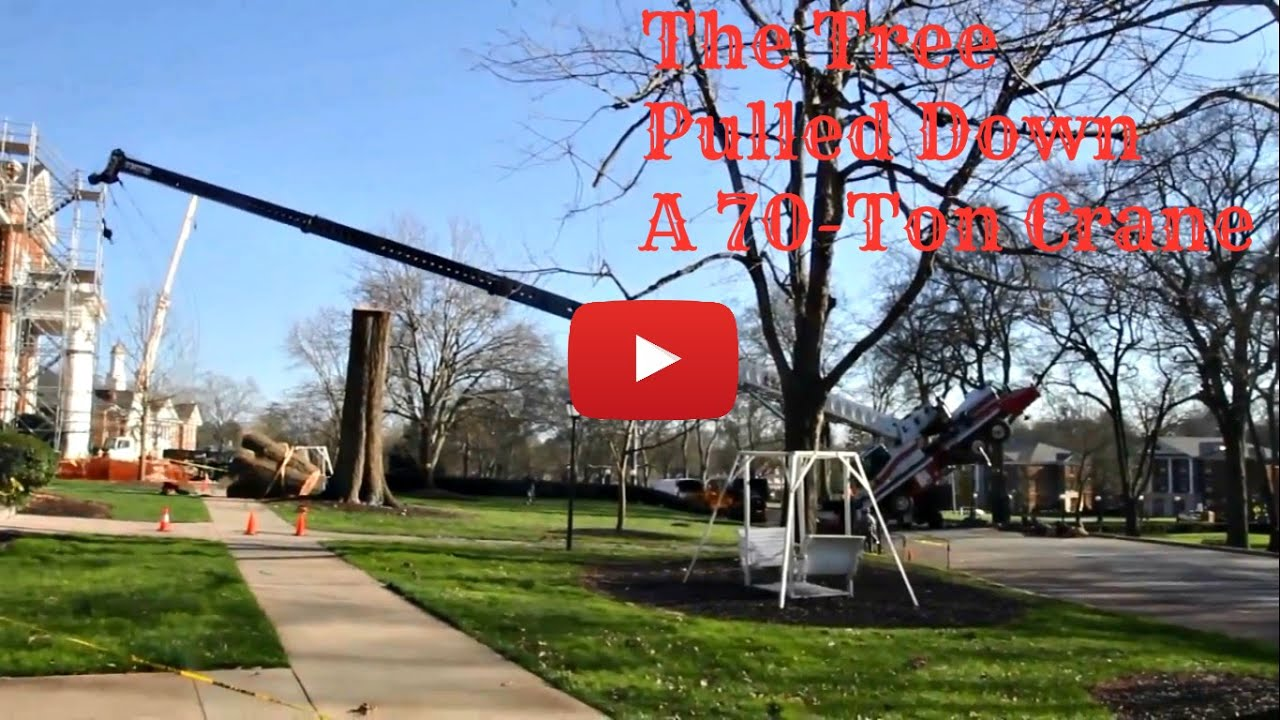 Crane Falls Down Coz of Tree