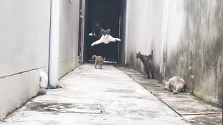驚異の身体能力!まるで映画のワンシーンのような超絶アクションで路地裏を駆け抜ける猫