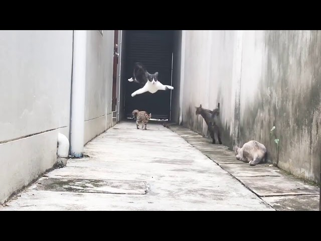 """Run"" Cats in Alley Viral Video."