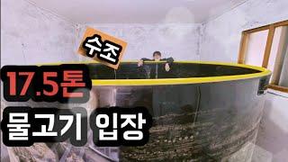 사육(물고기)_17.5톤 수조에 미꾸라지가 왔다?
