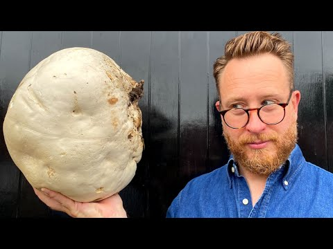 i-found-giant-puff-ball-mushroom-can-i-make-a-mushroom-double-cheese-burger-from-it?-|-john-quilter
