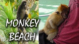 Monkey Beach Penang - wilde Affen hautnah - Monkey Forest -  Malaysia | #29
