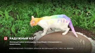 В Тюмени неизвестные раскрасили животное в разные цвета