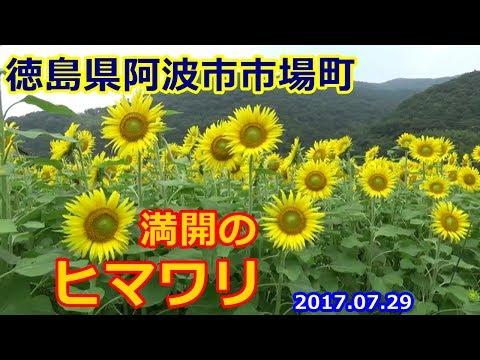 徳島県阿波市市場町日開谷・大影...