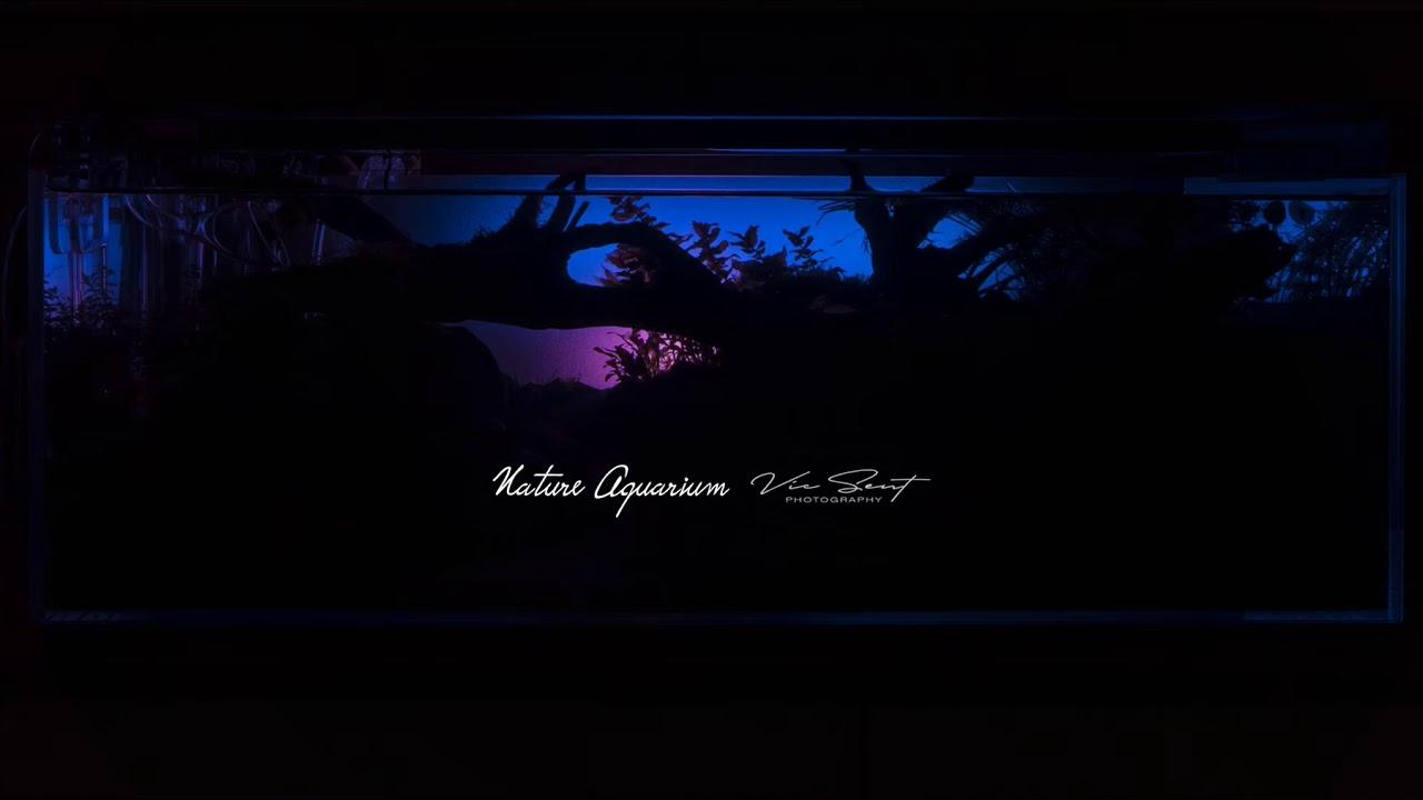 Sunrise Simulation Nature Aquarium