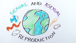 Types of Reproduction: Sexual versus Asexual Reproduction - iBiology & Youreka Science
