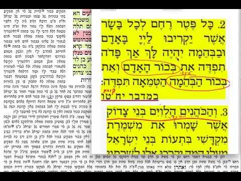 בכורות ד 4 שבת ט״ז ניסן תשע״ט Daf yomi Bechoros daf 4 ShmuelNavon שמואל נבון בכורות דף ד