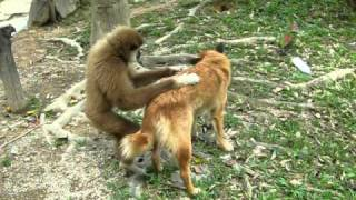 Monkey VS Dog