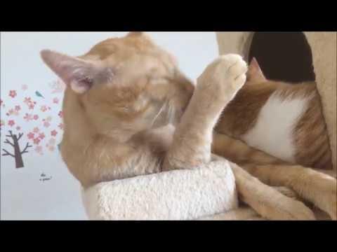 仲良し猫 A good cat『保護猫るる らら物語』