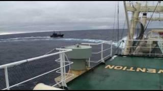 2010.02.06 調査母船日新丸の船尾から異常接近する妨害船ボブ・バーカー号