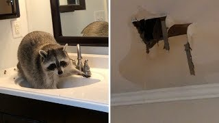 Raccoon Flooded My House!