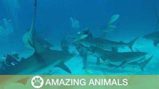 Diver Gets Caught In Vortex Of Sharks