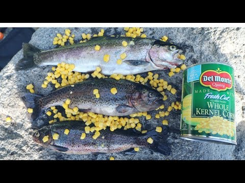 Catching Rainbow Trout With Canned Corn!