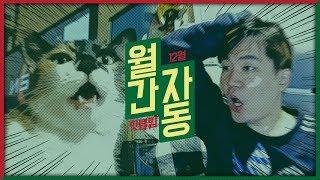 [월간 자동 2018 12월호] 고양이와 대화가 가능한 스트리머가 있다? / 12월 베스트 핫클립 하이라이트