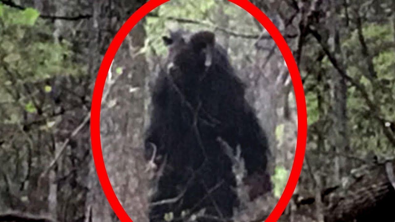 Real Werewolf Stalks Child Caught On Camera Wolfman Sighting Caught On Tape 2016 - 480×360