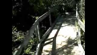 Pygmy Forest Pt1