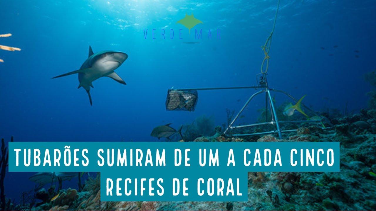 Tubarões estão funcionalmente extintos em um em cada cinco recifes de coral