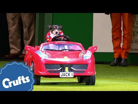Thumbnail: Barking Mad at Crufts