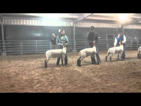 Willacy County Livestock Show