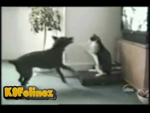 Funny Cats: Ludacris  Move B!tch Cat Compilation