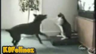 Funny Cats: Ludacris - Move B!tch (Cat Compilation)