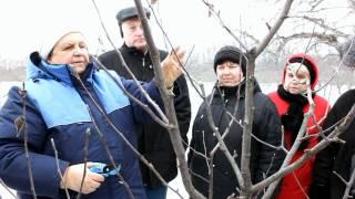Обрезка плодовых деревьев(Ландшафтная компания