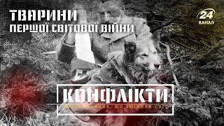 Тварини Першої світової війни, Конфлікти