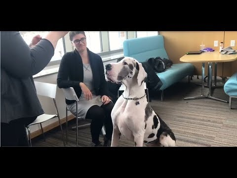 Service Dogs Pay Visit to Southern New Hampshire University