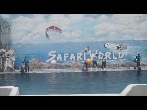 Safari World Bangkok Dolphin Show
