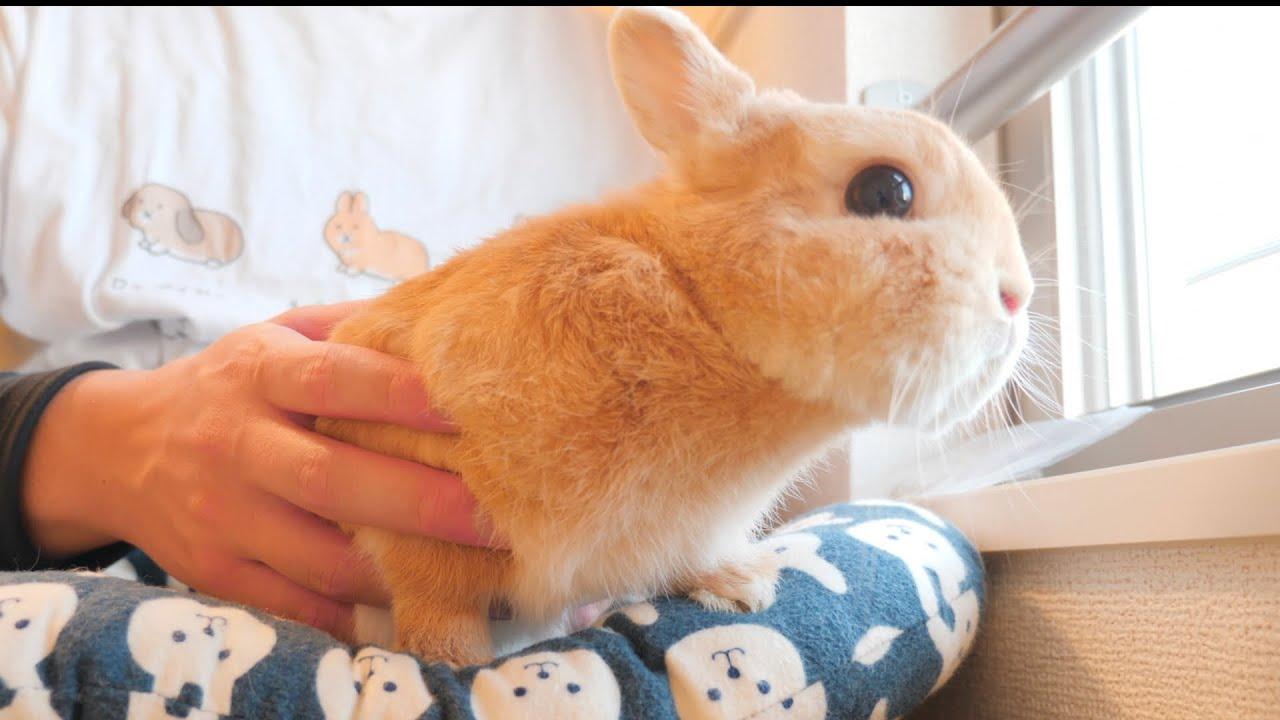 工事がうるさくて寝れないウサギが必死に抵抗する姿がこちら【No.552】