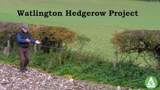 Hedgerow Project Film Final