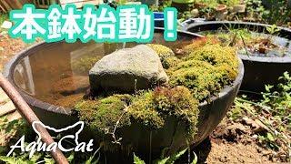 今年の睡蓮鉢始めます。 メダカとネコ4 ビオトープのある暮らし 始動編 thumbnail