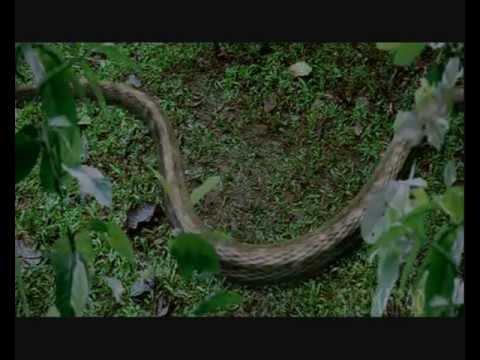 Hiss - the snake woman - lagi lagi milan dhun (sherya ghoshal)