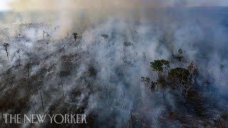 Why Is the Amazon Burning, and What's Next? | The New Yorker