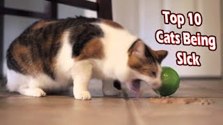 Top 10 cats being sick  cats throw up