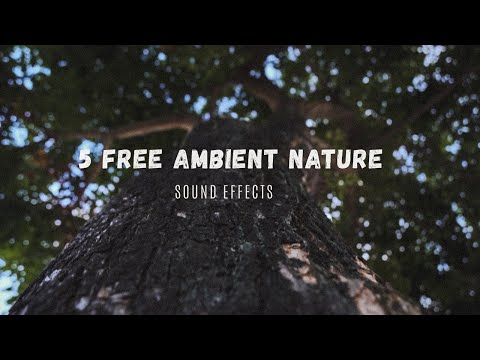 5 Free Ambient Nature Sound Effects  //  No Copyright  //  Free To Download
