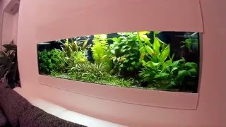 built in aquarium plant hd