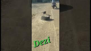 My.Dog Dezi