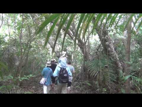 Rezerwat Jozani Forest, Zanzibar