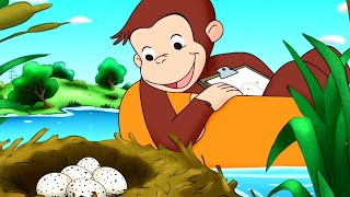Curious George 🐵Curious George's Egg Hunt 🐵 Kids Cartoon 🐵 Kids Movies 🐵Videos for Kids